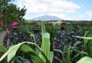 Dankormar Tinjau Program Ketahanan Pangan Kolatmar di Puslatpurmar 5 Baluran