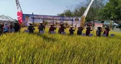 Dandim 0803 Madiun Bersama Walikota Panen Padi Di Lahan Tani Dadi Makmur