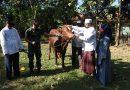 Hari Raya Idul Adha 1441 H, Kodim 0803/Madiun Potong Hewan Qurban Sapi