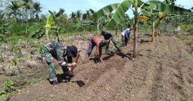 Stabilkan Ketersediaan Bahan Pokok Makanan, Satgas Yonif MR 413 Bantu Warga Perbatasan RI-PNG Tanam Pisang