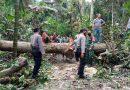 Babinsa Koramil 0806/07 Watulimo Bersama Warga Singkirkan Pohon Tumbang