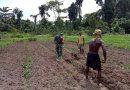 Babinsa Yapen Selatan Bantu Petani Binaannya Olah Lahan Pertanian
