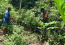 Manfaatkan Hari Libur Babinsa Mujianto Dampingi Petani Binaannya  Panen Cabe  Rawit